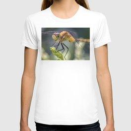 Dragonfly Closeup T-shirt