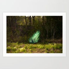 The Peacock Art Print
