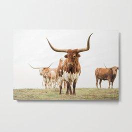 Longhorn Metal Print