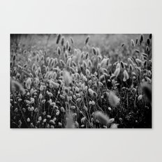 Soft wind Canvas Print