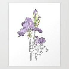 Violet iris - Botanical sketch / Flower illustration Art Print