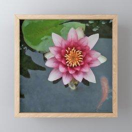 LILY PAD KOI Framed Mini Art Print