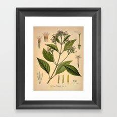 Botanical Print: Coffee Madder / Rubiaceae Framed Art Print
