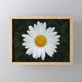 Shasta Daisy Framed Mini Art Print