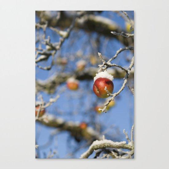 Snow Apple Canvas Print