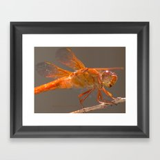 Red Dragonfly Framed Art Print