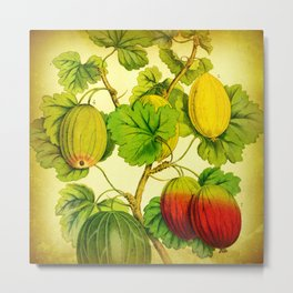 Golden Gooseberries Metal Print