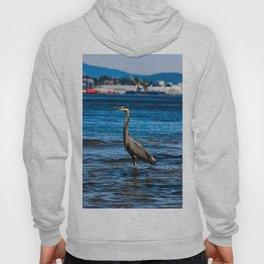 great blue heron in water in vancouver Hoody