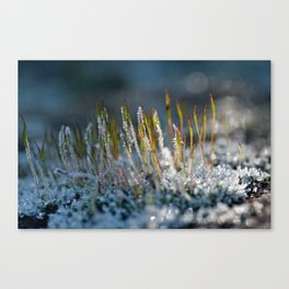 Frosted moss 36 Canvas Print