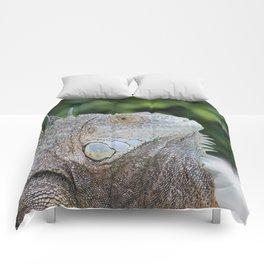 Iguana Comforters