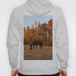 Horse Fall Days of Grazing Hoody