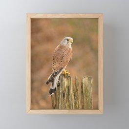 Perched Raptor Framed Mini Art Print