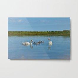 White swan family on the lake Metal Print