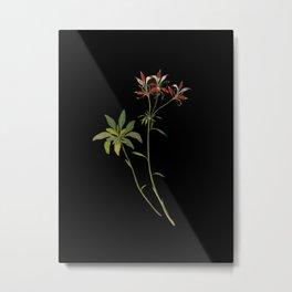 Alstromeria Ligtu Mary Delany Delicate Paper Flower Collage Black Background Floral Botanical Metal Print