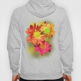 Pretty holiday orange daisy flower. Floral nature garden photography. Hoody