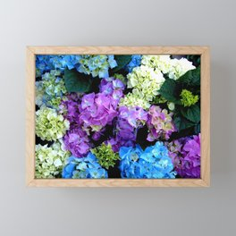Colorful Flowering Bush Framed Mini Art Print