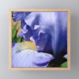 Blue Lavender Iris Close Up Framed Mini Art Print