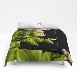 blooming Aesculus tree on black Comforters