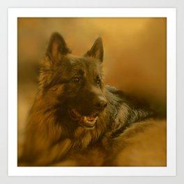 Golden King Shepherd Art Print