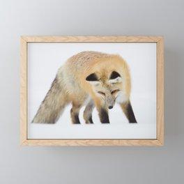 Red Fox Hunting Intently Framed Mini Art Print