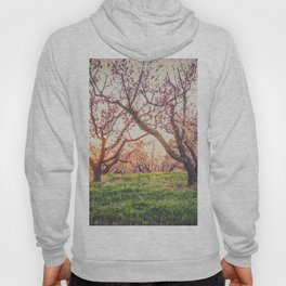Dreamy Peach Orchard Hoody