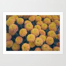 Autumn All Over Sunshine Chrysanthemums -- Fall Botanical Art Print