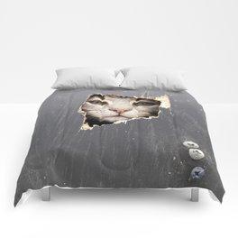Curiosity Comforters