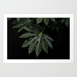 green leaf on black background Art Print