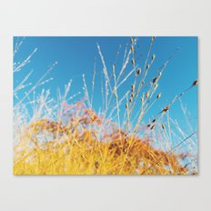 The Colors of Fall Canvas Print