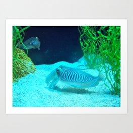 Cuddle Fish Art Print