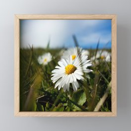 Close-up Daisy Framed Mini Art Print