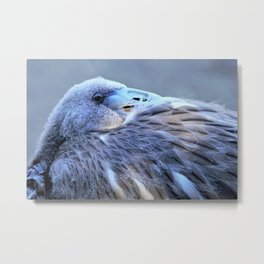 Young Flamingo Feathers by Reay of Light Metal Print
