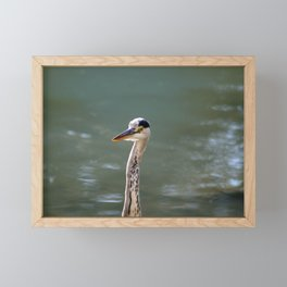 Grey Egret close up Framed Mini Art Print