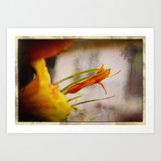 Dawn Lily Art Print
