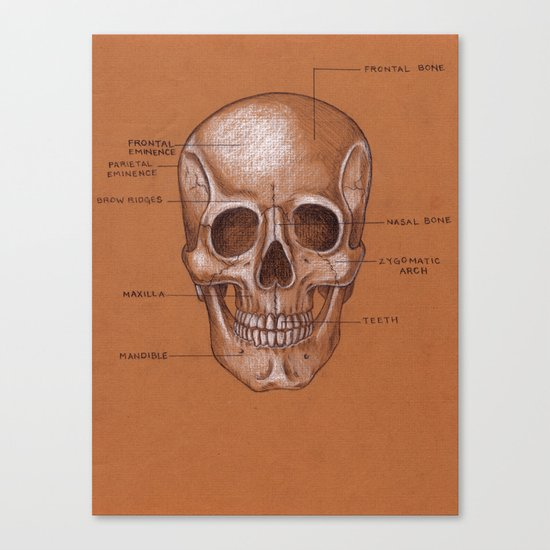 Jesse Young's Human Anatomy Drawing of the SKULL (Circa 2005) Canvas Print