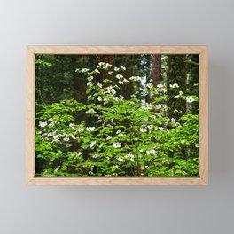 Flowering Dogwood, McKinley Grove, California Framed Mini Art Print