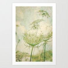 Sanctuary -- White Queen Anne's Lace Meadow Wild Flower Botanical Art Print