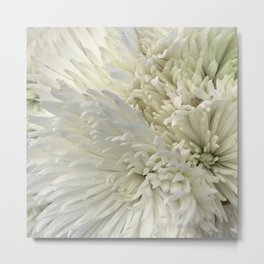 Ivory White Feathery Mums Floral Photo Metal Print