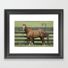 Marquetry -  Old Friends Equine, Georgetown, KY Framed Art Print
