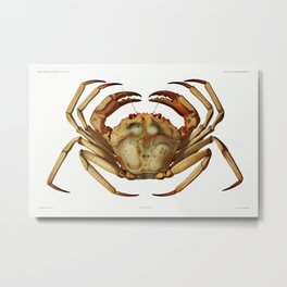 Chaceon, the Atlantic deep sea red crab illustration from Résultats des Campagnes Scientifiques by A Metal Print