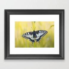 Swallow Tail Framed Art Print