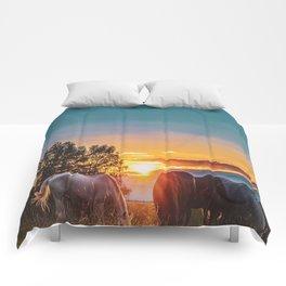 Horse Sunrise (Color) Comforters