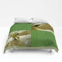 Pale Yellow Poinsettia 1 Blank Q5F0 Comforters