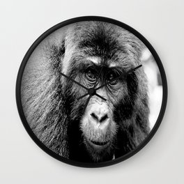 Silver back Gorilla Wall Clock