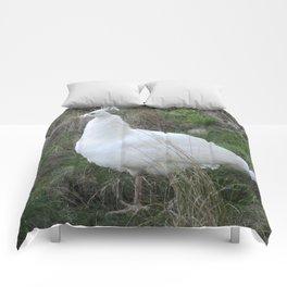 Albino peahen Comforters