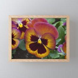 Pansy Painted Framed Mini Art Print