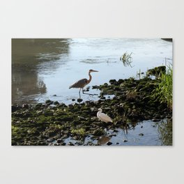Herons on the river bank Canvas Print
