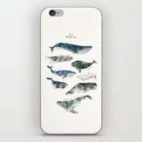 blue iPhone & iPod Skins featuring Whales by Amy Hamilton