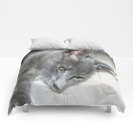Close Up Of A Grey Kitten Comforters