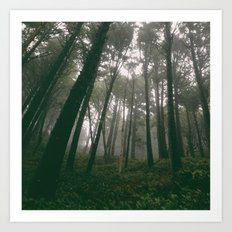 Looking Up Into The Fog Art Print